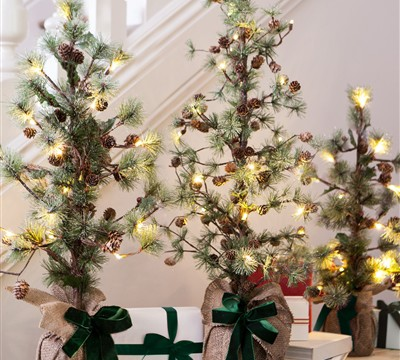 7 Great Christmas Trees to Inspire You